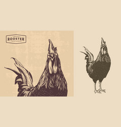 rooster line art vector image