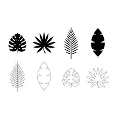 tropical palm monstera leaves icon isolated vector image