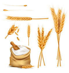 Wheat ears grains and flour in sack set vector