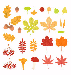 Autumn set with leaves berries mushrooms vector