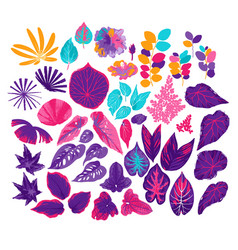 Collection of different exotic leaves drawn vector