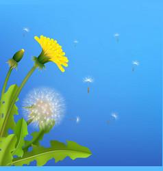 Dandelion bush flying seeds blue background vector
