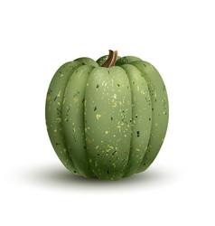 realistic of a green pumpkin vector image