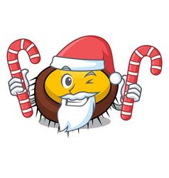 Santa with candy sea urchin mascot cartoon vector