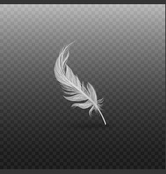 elegant white bird feather light and fluffy swan vector image