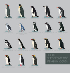 set of flat geometric species of penguins vector image