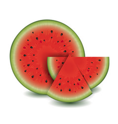 watermelon collection vector image