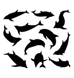 dolphin silhouettes set vector image