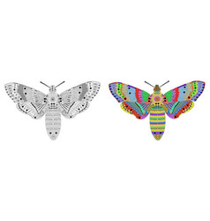 Entangle stylized color and black butterfly vector