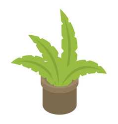 Houseplant icon isometric style vector