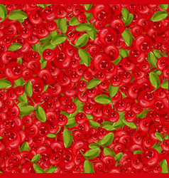 seamless pattern cranberry vector image