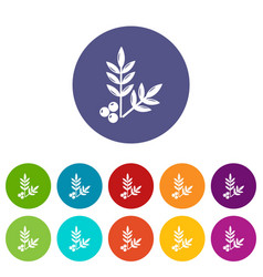 spa eco leafs icons set color vector image