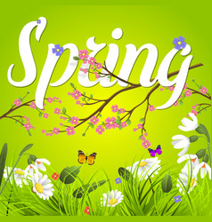 Spring text lettering background with vector