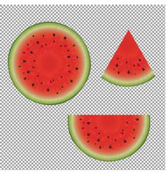 watermelon set vector image