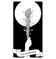 Aces tarot cards wands hand holding a rod vector