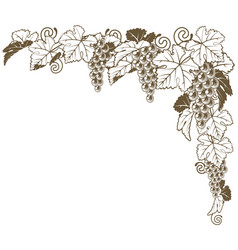 grape vine corner ornament vector image