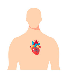 heart inside the male human body vector image