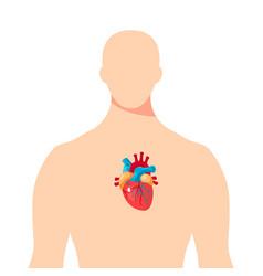 Heart inside the male human body vector