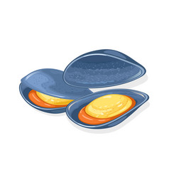 Opened blue marine mussels oysters fresh vector