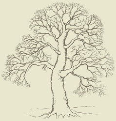 Tree with bare branches vector