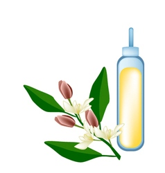 Wine Magnolia Flower or Magnolia Figo Flower vector