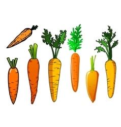 Fresh isolated orange carrot vegetables vector