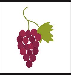image of a cute grape isolated on a white vector image
