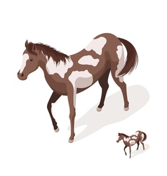 Isometric 3d of pinto horses vector