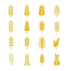 Wheat ears bread symbols vector