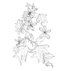 plant with flowers vector image vector image