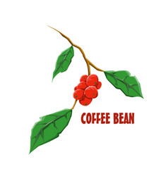 Logo icon design coffee bean farm vector