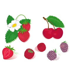 red fruits vector image