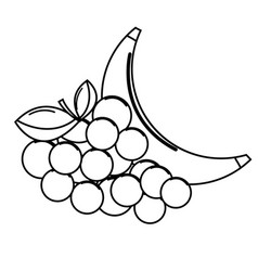 Silhouette grape and babana fruit icon vector