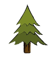 drawing pine tree forest camping icon vector image