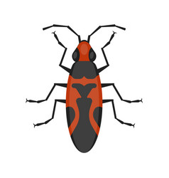 Flat style of seed bug vector