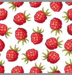 raspberry pattern vector image