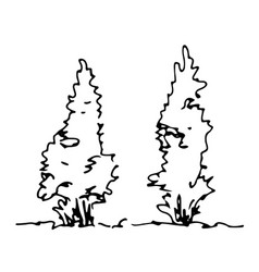 Set of hand drawn sketch thujas architect trees vector