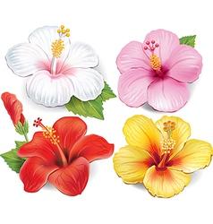Set of Hibiscus vector image vector image