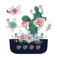 Succulents cacti hand drawn on a white background vector