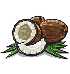 coconuts with leaves vector image vector image