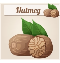 Nutmeg Detailed Icon vector image vector image