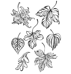 Set of Contour Leaves vector image