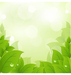 Fresh And Green Leaves vector image