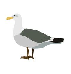 Gull flat design vector