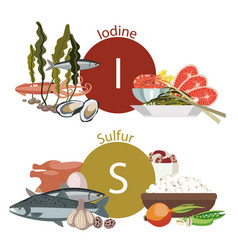 Healthy eating vector