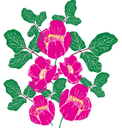 Painted pink peony of a crimean vector