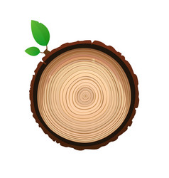 texture of sawn wood brown object with foliage vector image