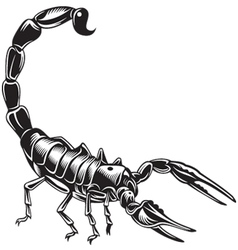Scorpion vector image vector image