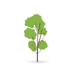 biag tree isolated white flat of tall tree vector image
