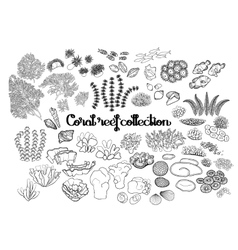 Collection coral reef elements vector